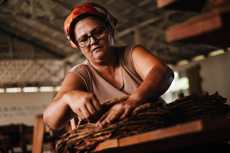 Frau beim stapeln von Tabakblättern Tabakfarm Kuba