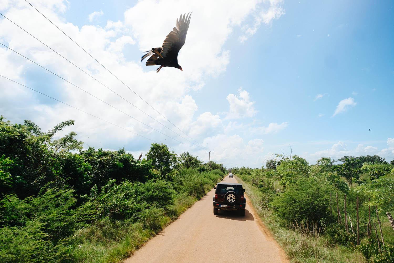 Autosafari durch den Dschungel Kuba
