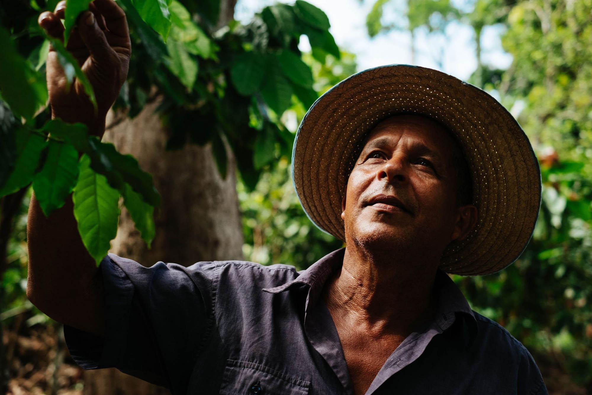 Mann mit Strohhut auf einer Plantage